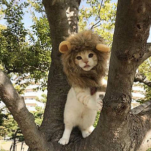 1Pc  Pet Cat Dog Dress Up Costume Wig Emulation Lion Hair Mane Ears Head Cap Autumn Winter Muffler Scarf Pet Products