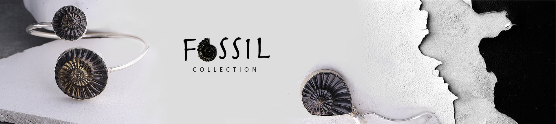 Banner for Fossil Collection based on Ammonites