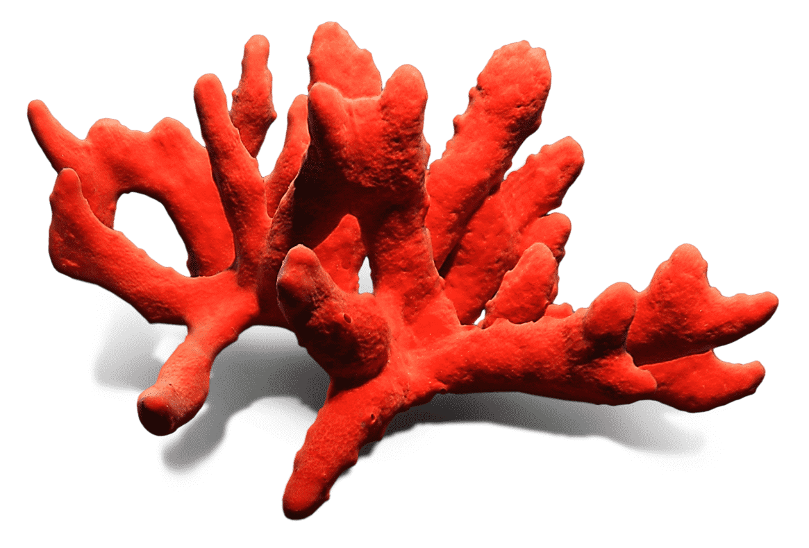 Coral formation - branch like
