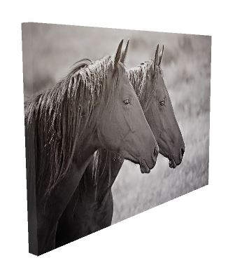 Black Beauty Brothers Horse Canvas Wall Art