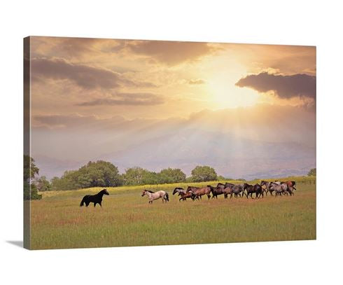 At First Sight Horse Canvas Wall Art