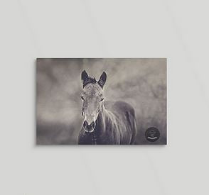 Gesture of Interest Western Horse Canvas Wall Art