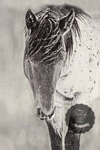 Load image into Gallery viewer, Shy Boy in the Storm Western Horse Canvas Wall Art