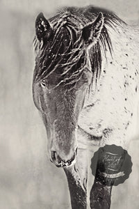 Shy Boy in the Storm Western Horse Canvas Wall Art
