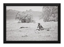 Load image into Gallery viewer, Spring Dream Horse Canvas Wall Art