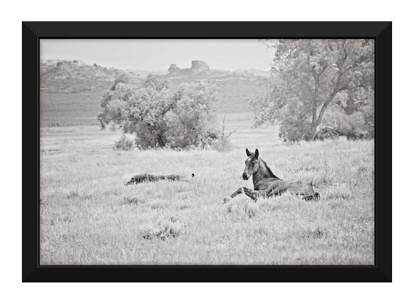 Spring Dream Horse Canvas Wall Art