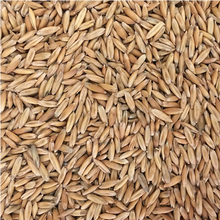 Load image into Gallery viewer, LETHAL WINTER OATS®