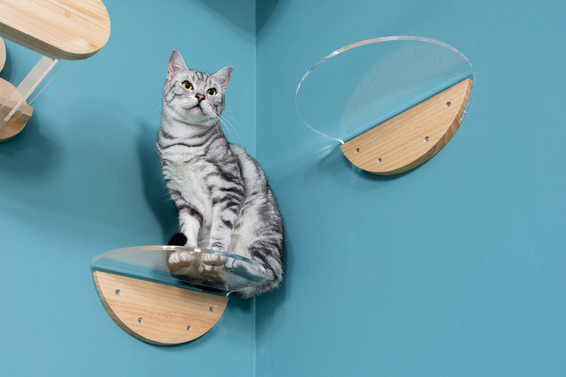 MyZoo Round Lack Clear (1 pcs): Wall Mounted Cat Shelves with Transparent Board