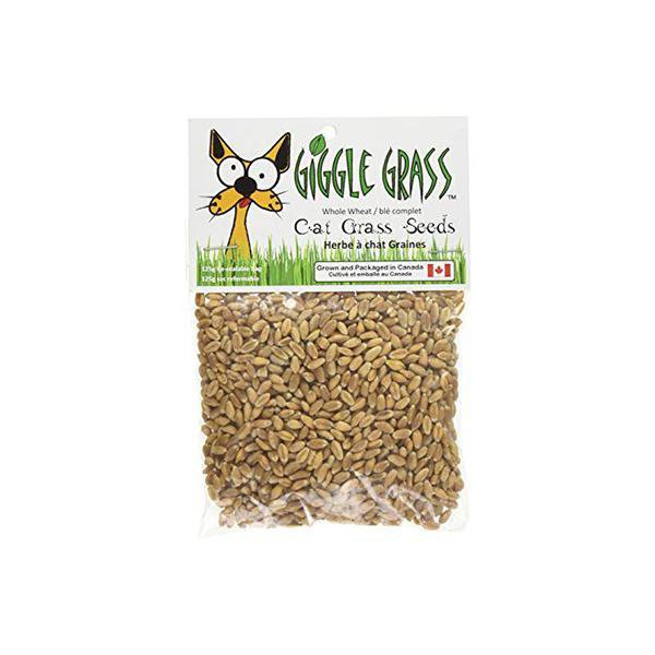 Giggle Grass Cat Grass Seeds 25g