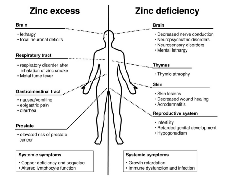 Zinc, Exercise and Thyroid Health