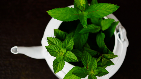 The Benefits and Uses of Peppermint Essential Oil