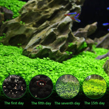 Load image into Gallery viewer, Aquarium Plant Seeds Water Aquatic Green Water Grass Decoration Easy Planting Fish Tank Landscape Ornament - YourSmartPets