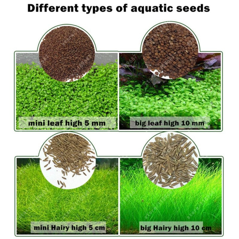 Aquarium Plant Seeds Water Aquatic Green Water Grass Decoration Easy Planting Fish Tank Landscape Ornament - YourSmartPets