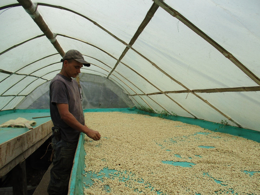 Colombia - Finca La Mesa - Lot 2 - Orange, Juicy, Milk Chocolate, Caramel