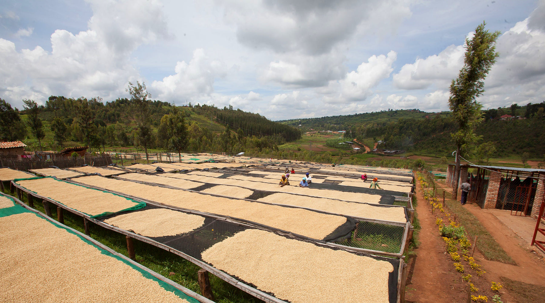From the slopes of Huye Mountain - Our latest Rwandan