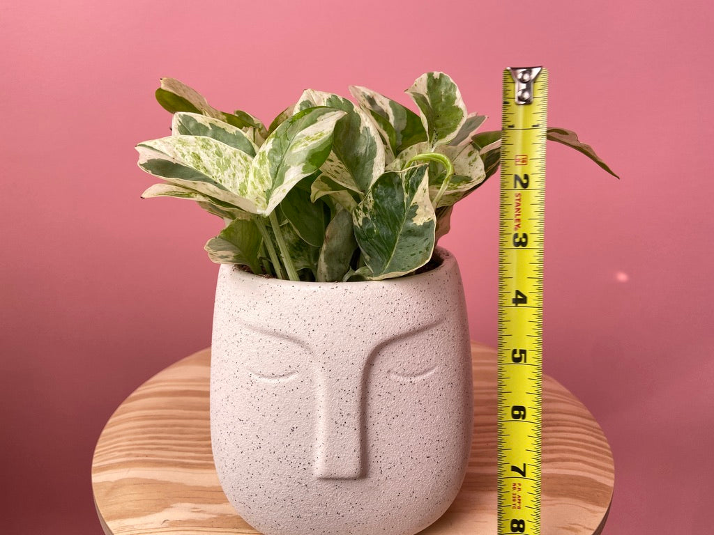 "Face Pot + Pothos ""Pearl and Jade"""