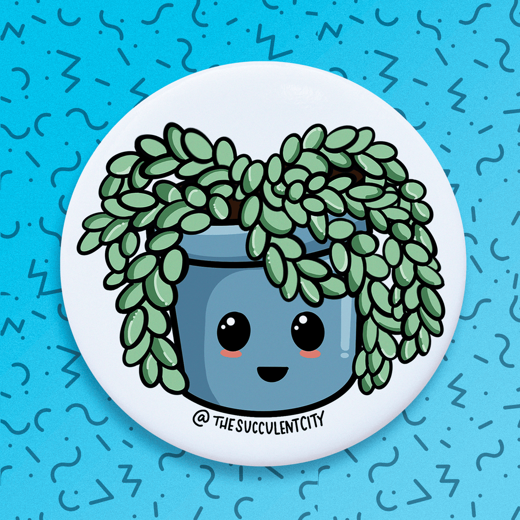 Sedum - The Succulent City