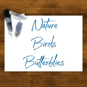 Birds + Butterflies-Collection-Blue Jay Bay