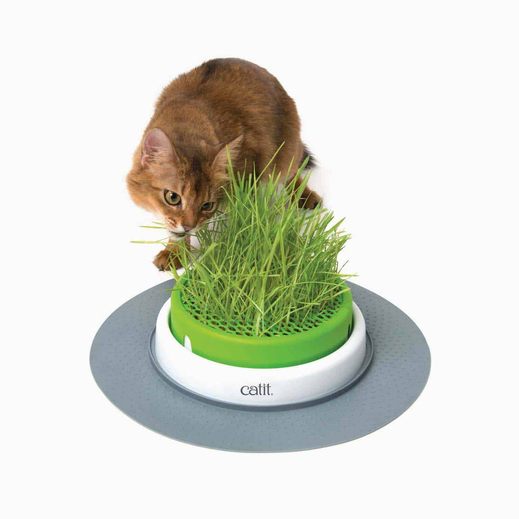 Germinador de Pasto para gatos Senses 2.0 cat it