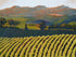 """Wine Country #40"" print by Thomas Andrew"