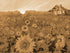 """Cabin in Sunflowers"" Rustic / print by Thomas Andrew"
