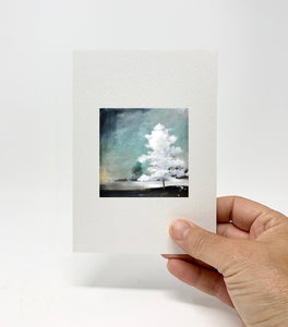 "5 x 7 Miniature / ""White Majestic"" by Thomas Andrew - Thomasandrewartwork"