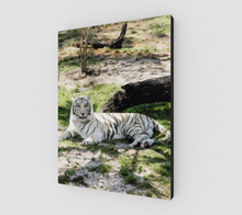 "Load image into Gallery viewer, ""White Tiger At Rest"" R - Fine Art Canvas"