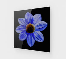 "Load image into Gallery viewer, ""Midnight Blues"" Fine Art Acrylic Print"