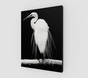 """Great Egret in Full Bloom I"" Fine Art Canvas"