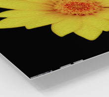 "Load image into Gallery viewer, ""Sun Flower"" Fine Art Acrylic Print"