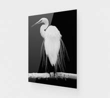 "Load image into Gallery viewer, ""Great Egret in Full Bloom I"" Fine Art Acrylic Print"