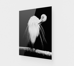 """Great Egret in Full Bloom III"" Fine Art Acrylic Print"