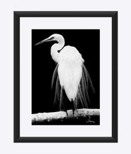 "Load image into Gallery viewer, ""Great Egret in Full Bloom 1 - R"" Matted Fine Art Print"