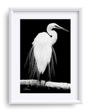 "Load image into Gallery viewer, ""Great Egret in Full Bloom 1 - L"" Matted Fine Art Print"