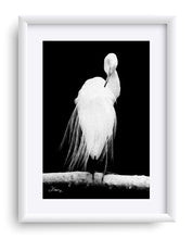 "Load image into Gallery viewer, ""Great Egret in Full Bloom 2"" Matted Fine Art Print"