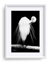 "Load image into Gallery viewer, ""Great Egret in Full Bloom 3"" Matted Fine Art Print"