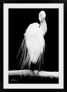 """Great Egret in Full Bloom 2"" Framed Fine Art Expression"