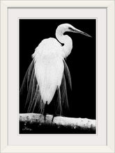 "Load image into Gallery viewer, ""Great Egret in Full Bloom 1 - L"" Framed Fine Art Expression"