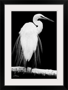 """Great Egret in Full Bloom 1 - L"" Framed Fine Art Expression"