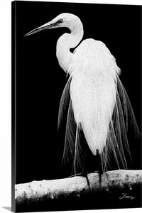 """Great Egret in Full Bloom 1 - R"" Fine Art Canvas"