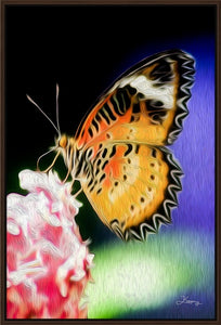 """Malay Lacewing Butterfly 1"" Fine Art Canvas"