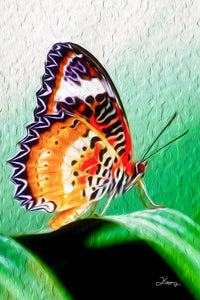 """Malay Lacewing Butterfly 2"" Fine Art Metal Print"