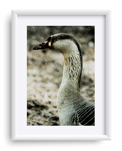 """My Good Side"" Matted Fine Art Print"