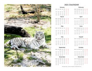 """White Tiger at Rest"" 17x22 inch 2021 Fine Art Calendar"