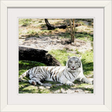 "Load image into Gallery viewer, ""White Tiger at Rest - L"" Framed Fine Art Expression"
