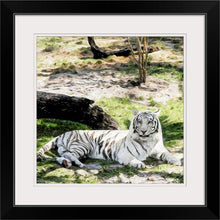 Load image into Gallery viewer, framed white tiger fine art