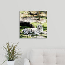 "Load image into Gallery viewer, ""White Tiger at Rest - L"" Fine Art Metal Print"