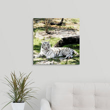 "Load image into Gallery viewer, ""White Tiger at Rest - R"" Fine Art Metal Print"