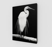 "Load image into Gallery viewer, ""Great Egret in Full Bloom I"" Fine Art Canvas"
