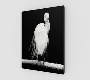 """Great Egret in Full Bloom II"" Fine Art Canvas"